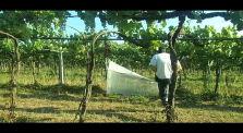 Facilitazione tecnica reti alimentari contadine by facilitazione agroecologica